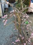 神戸市垂水区の家庭教師  ぴろぴろ先生先生