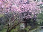 京都市上京区の家庭教師  二条先生