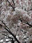 横須賀市の家庭教師  桜先生